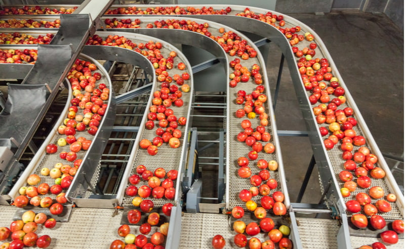 Clean and fresh gala apples on a conveyor belt